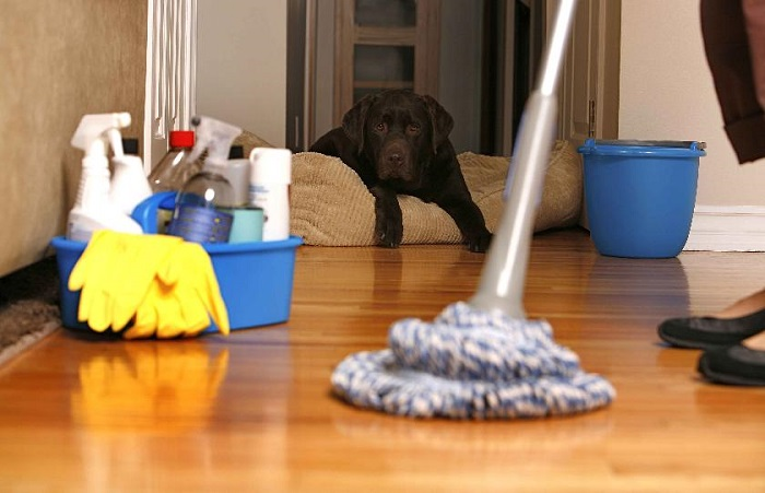 خدمات نظافتی منازل