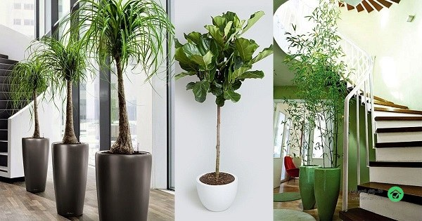 Plants-for-Home