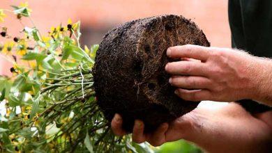 Photo of ترفندهای مراقبت از گل و گیاه در زمستان