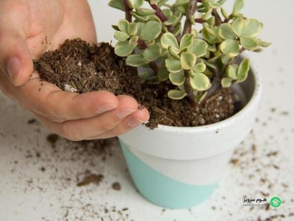 نگهداری از گیاهان آپارتمانی