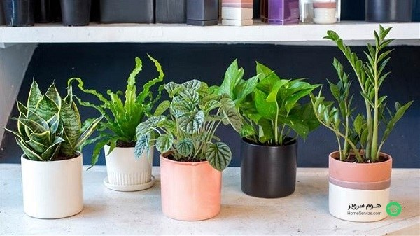 گل ها و گیاهان آپارتمانی