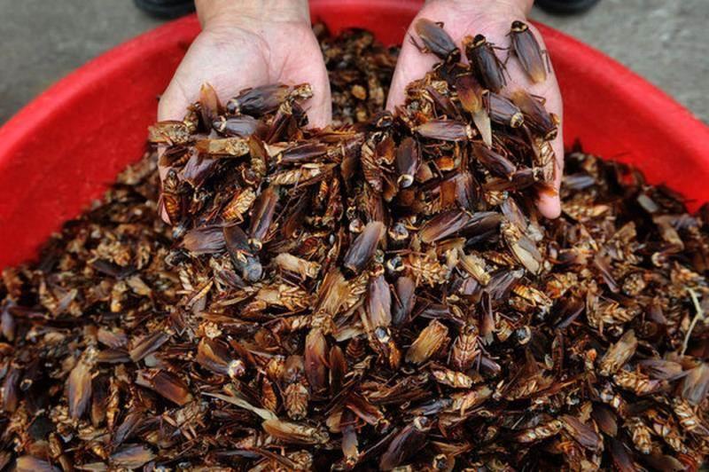 سمپاشی خانه تنها راه خلاصی از حشرات و جانوران موذی