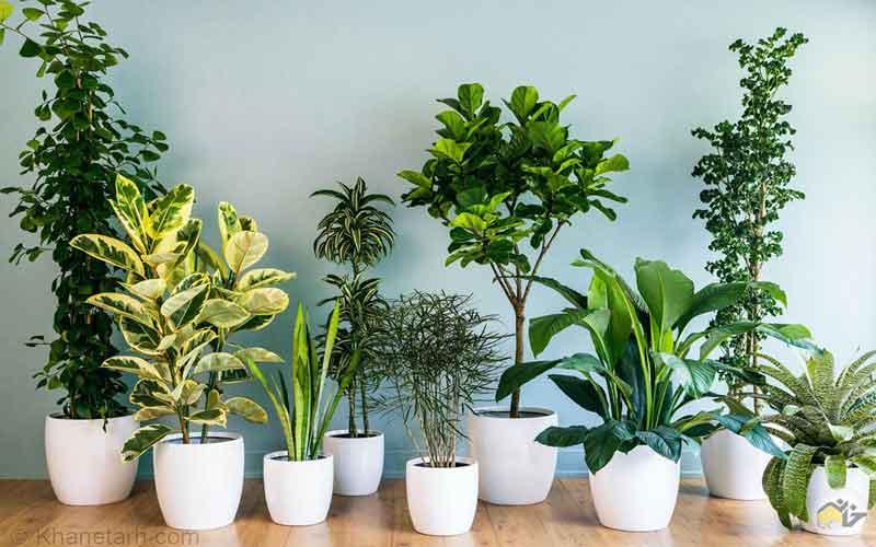 Photo of نگهداری از گیاهان و گلهای آپارتمانی