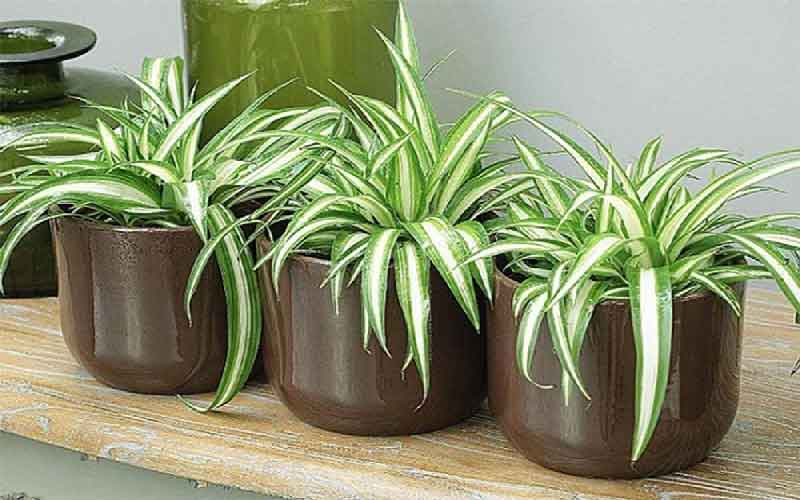 چگونه از گیاهان آپارتمانی مقاوم نگهداری کنیم؟