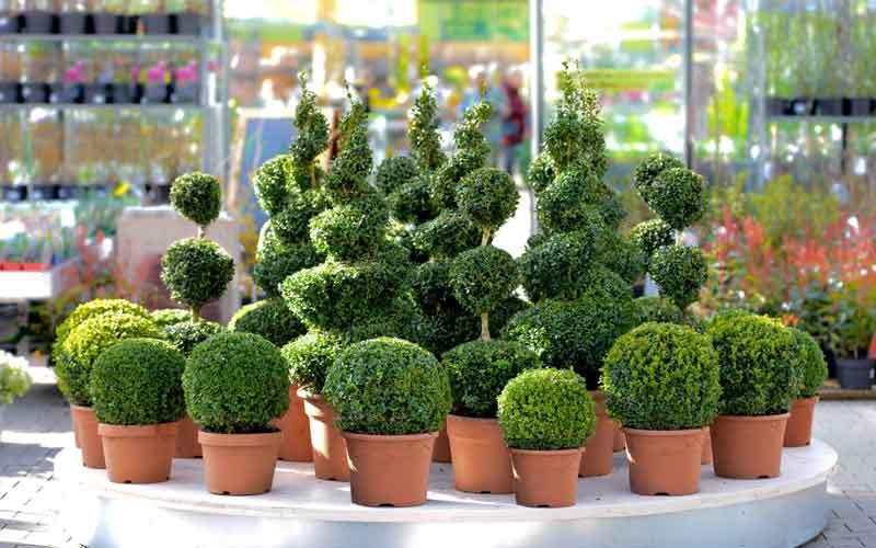 نگهداری از زیباترین درختچه های آپارتمانی