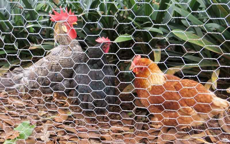Photo of توری مرغی چیست و در چه مکان هایی نصب می شود؟
