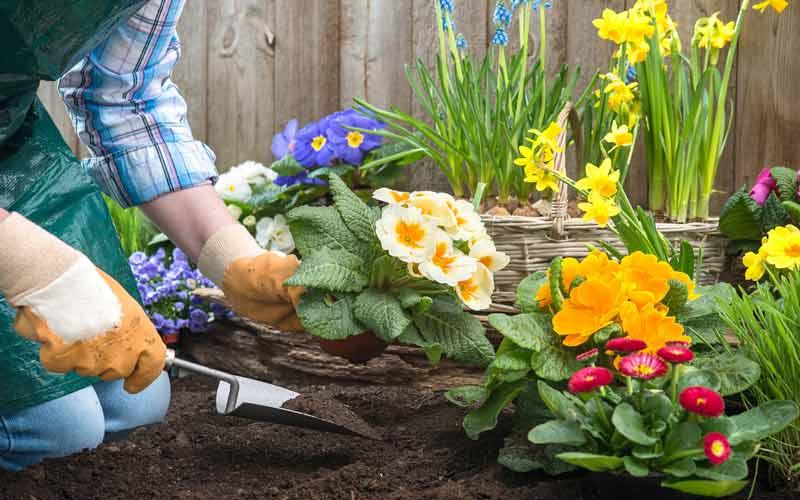 Photo of نکات پرورش گل و گیاه در خانه