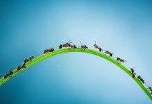 Photo of ۷ راه طبیعی برای از بین بردن مورچه ها