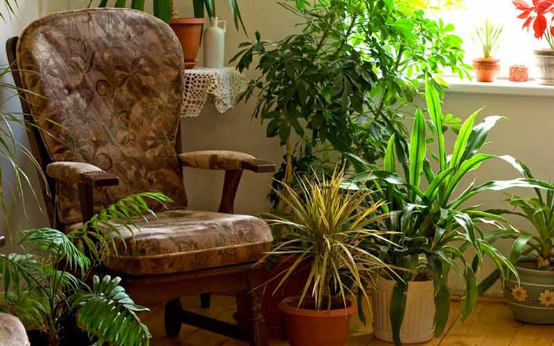 اسباب کشی با گیاهان