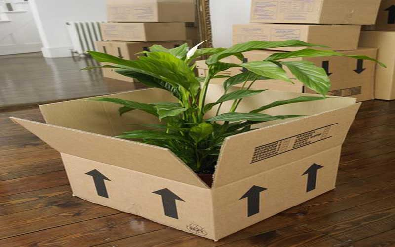 ترفندهای جابجایی گیاهان