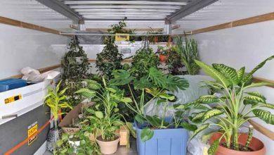 Photo of فوت و فن جابجایی گیاهان در اسباب کشی
