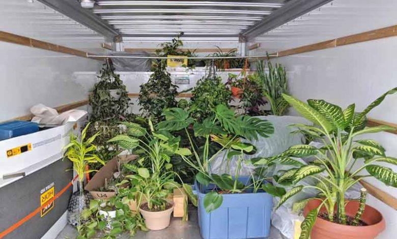 جابجایی گیاهان در اسباب کشی